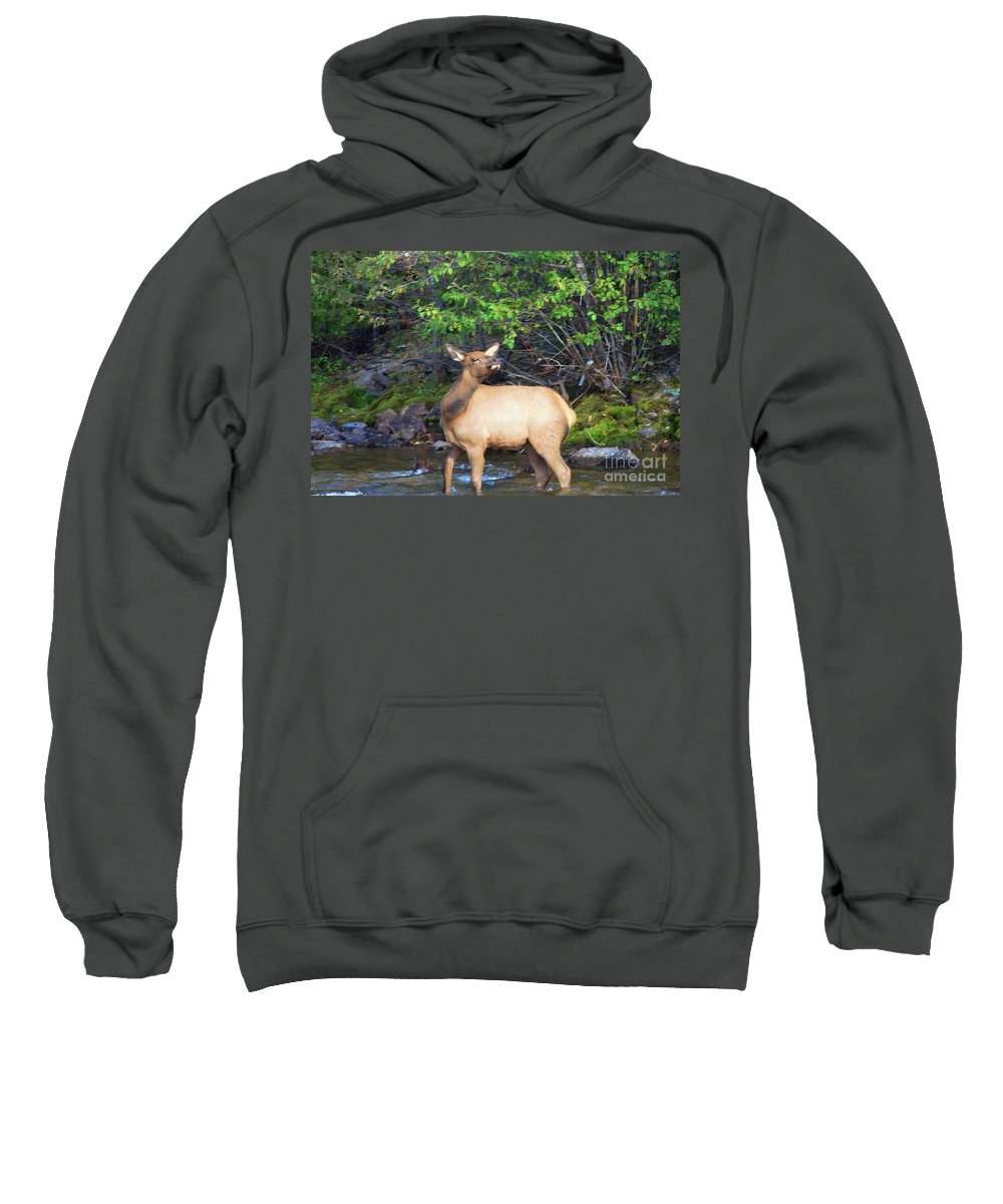 Elk Sweatshirt featuring the photograph All Alone by Kathleen Struckle