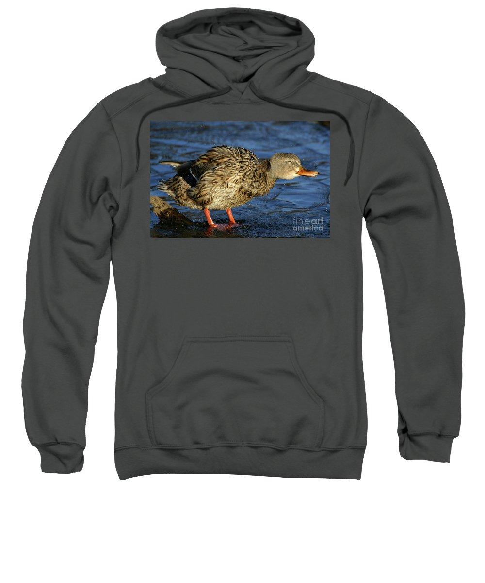 Mallard Sweatshirt featuring the photograph All Shook Up by Karol Livote