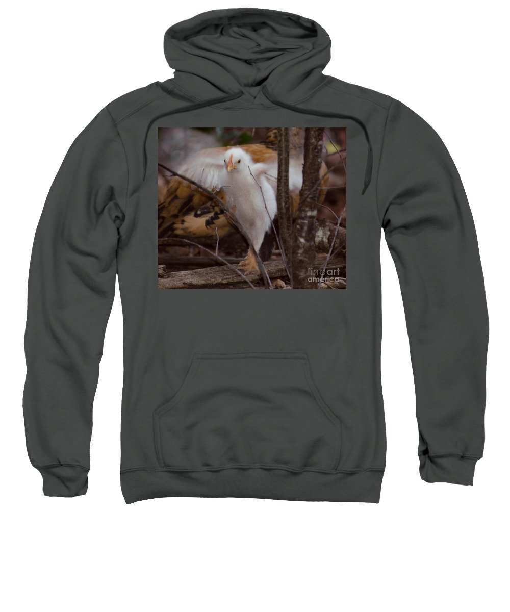 Chicken Sweatshirt featuring the photograph Almost One Month Old by Donna Brown