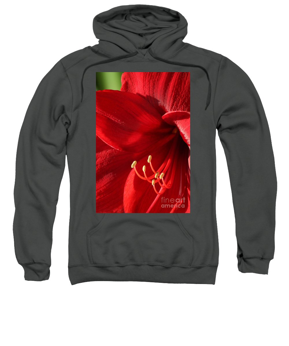 Flower Sweatshirt featuring the photograph Amaryllis6782 by Gary Gingrich Galleries