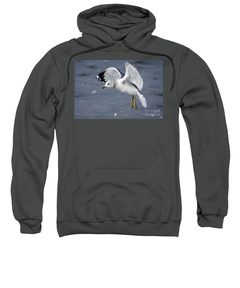 Seagull Sweatshirt featuring the photograph Angel Wings by Karol Livote