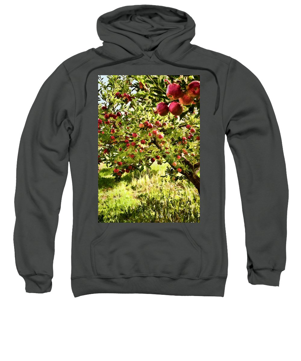 Apples Sweatshirt featuring the photograph Apple Orchard by Diana Powell