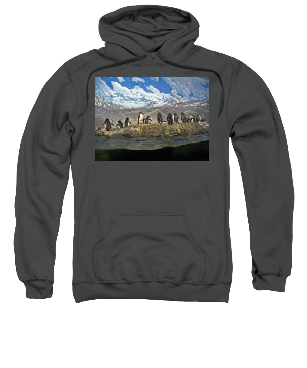 Penguins Sweatshirt featuring the photograph Aquarium Penguins Line Dance by Marian Bell