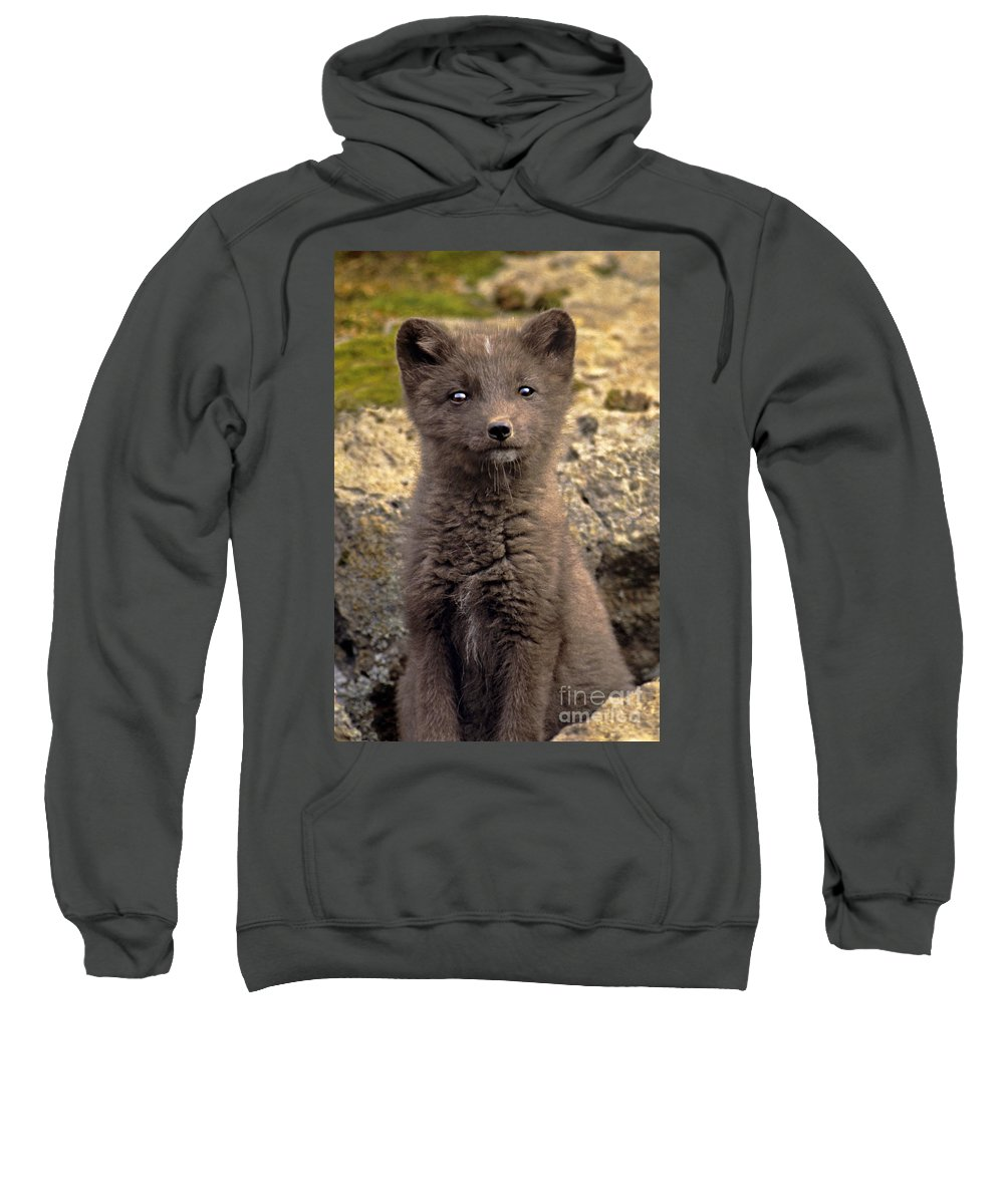 North America Sweatshirt featuring the photograph Arctic Fox Pup Alaska Wildlife by Dave Welling