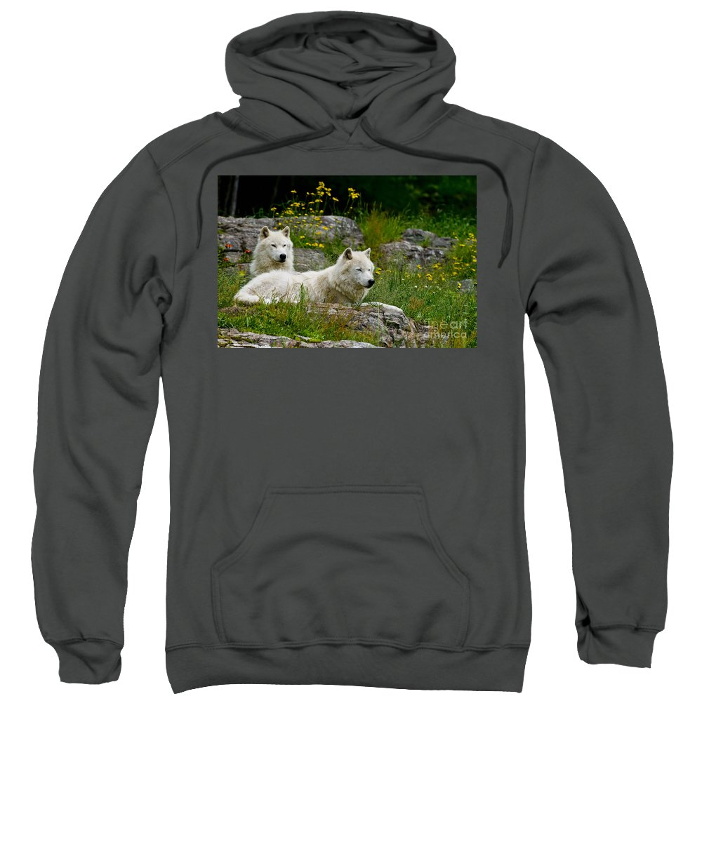 Arctic Wolf Sweatshirt featuring the photograph Arctic Wolf Pictures 1128 by World Wildlife Photography