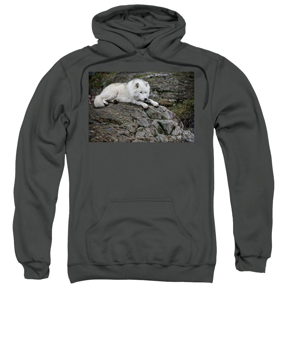 Arctic Wolf Sweatshirt featuring the photograph Arctic Wolf Pictures 1142 by World Wildlife Photography