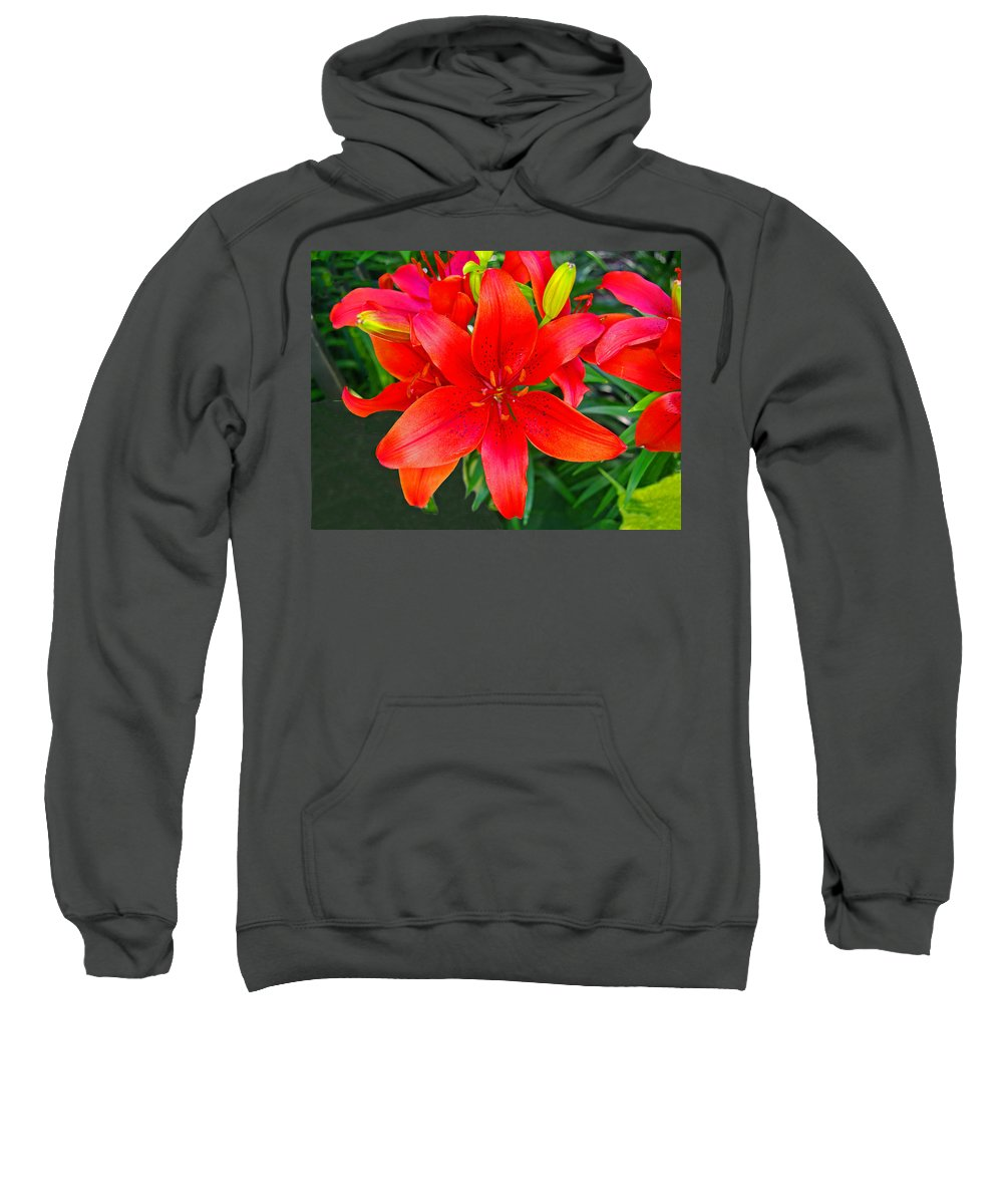 Lily Sweatshirt featuring the photograph Asiatic Hybrid Lily by Rich Walter