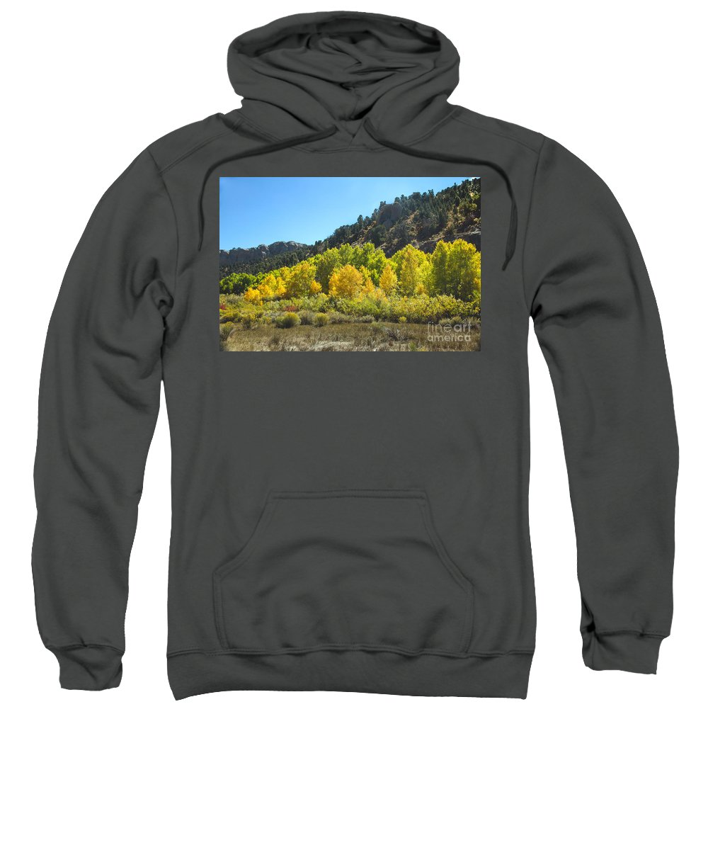 Fall Color Sweatshirt featuring the photograph Aspen Grove In The Fall by Robert Bales