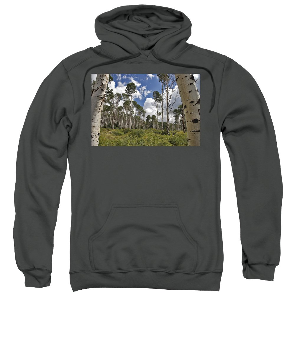 3scape Sweatshirt featuring the photograph Aspen Grove by Adam Romanowicz