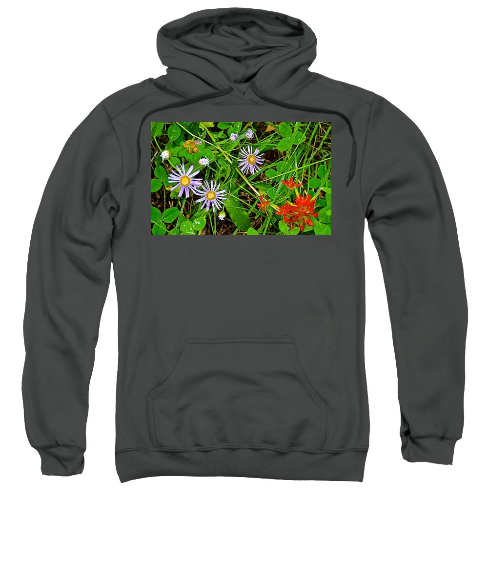 Asters And Scarlet Paintbrush On Trail To Swan Lake In Grand Teton National Park Sweatshirt featuring the photograph Asters And Scarlet Paintbrush On Swan Lake Trail In Grand Teton National Park-wyoming by Ruth Hager