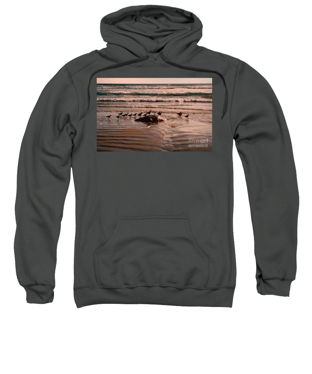 Sea Gulls Sweatshirt featuring the photograph Audience by Andrea Goodrich