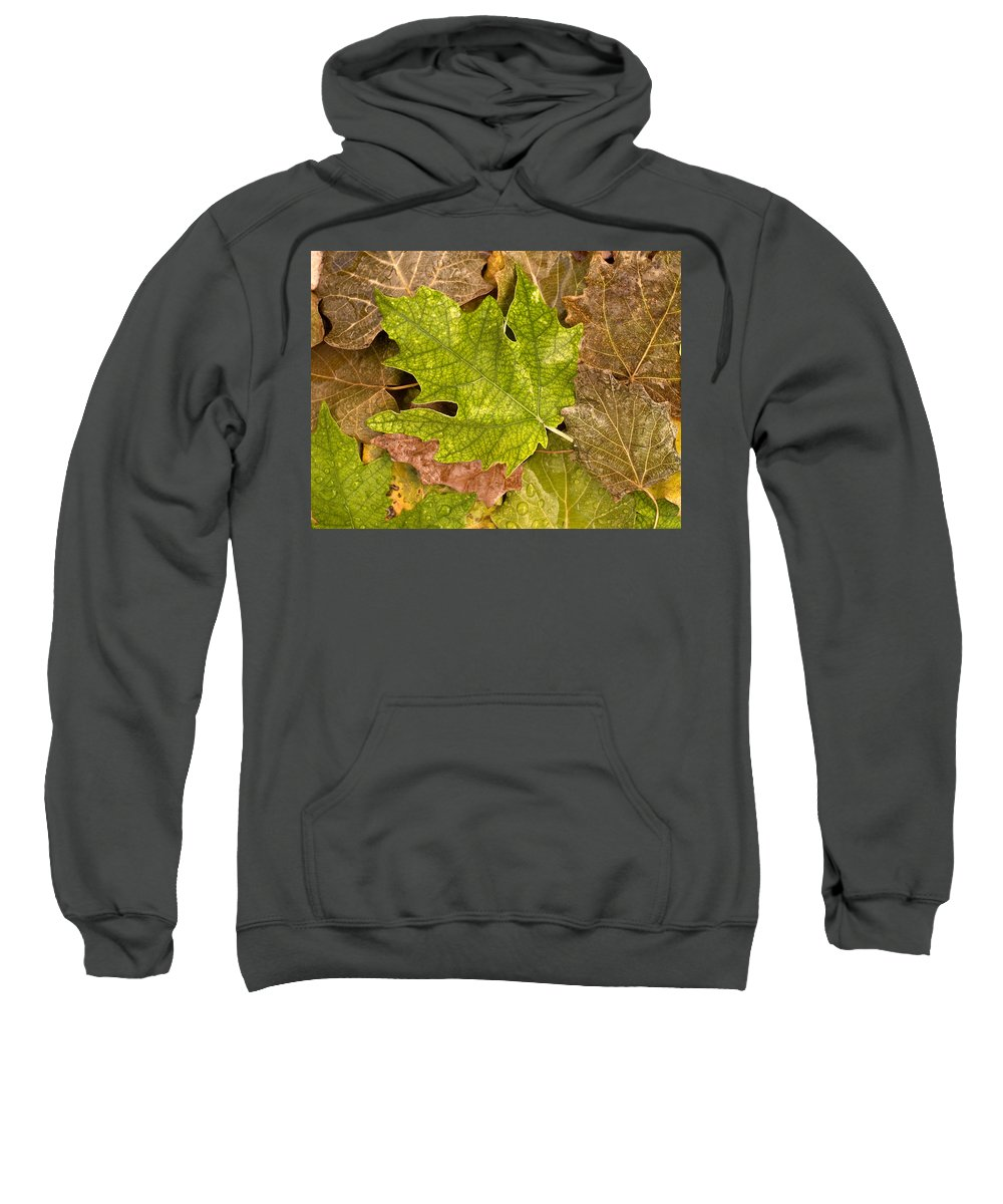 Nobody Sweatshirt featuring the photograph autumm is coming 3 - A carpet of autumn color leaves by Pedro Cardona Llambias