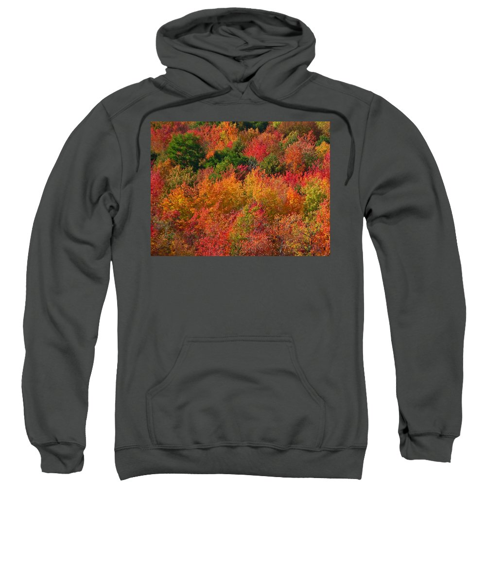 Autumn Sweatshirt featuring the photograph Autumn Forest by Aimee L Maher ALM GALLERY