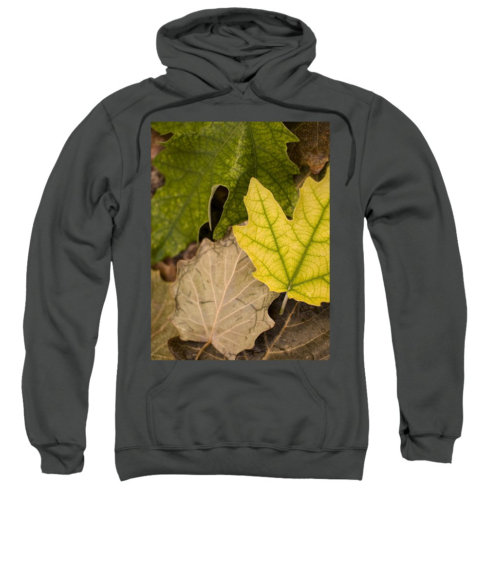Nobody Sweatshirt featuring the photograph Autumn Is Coming 1 by Pedro Cardona Llambias