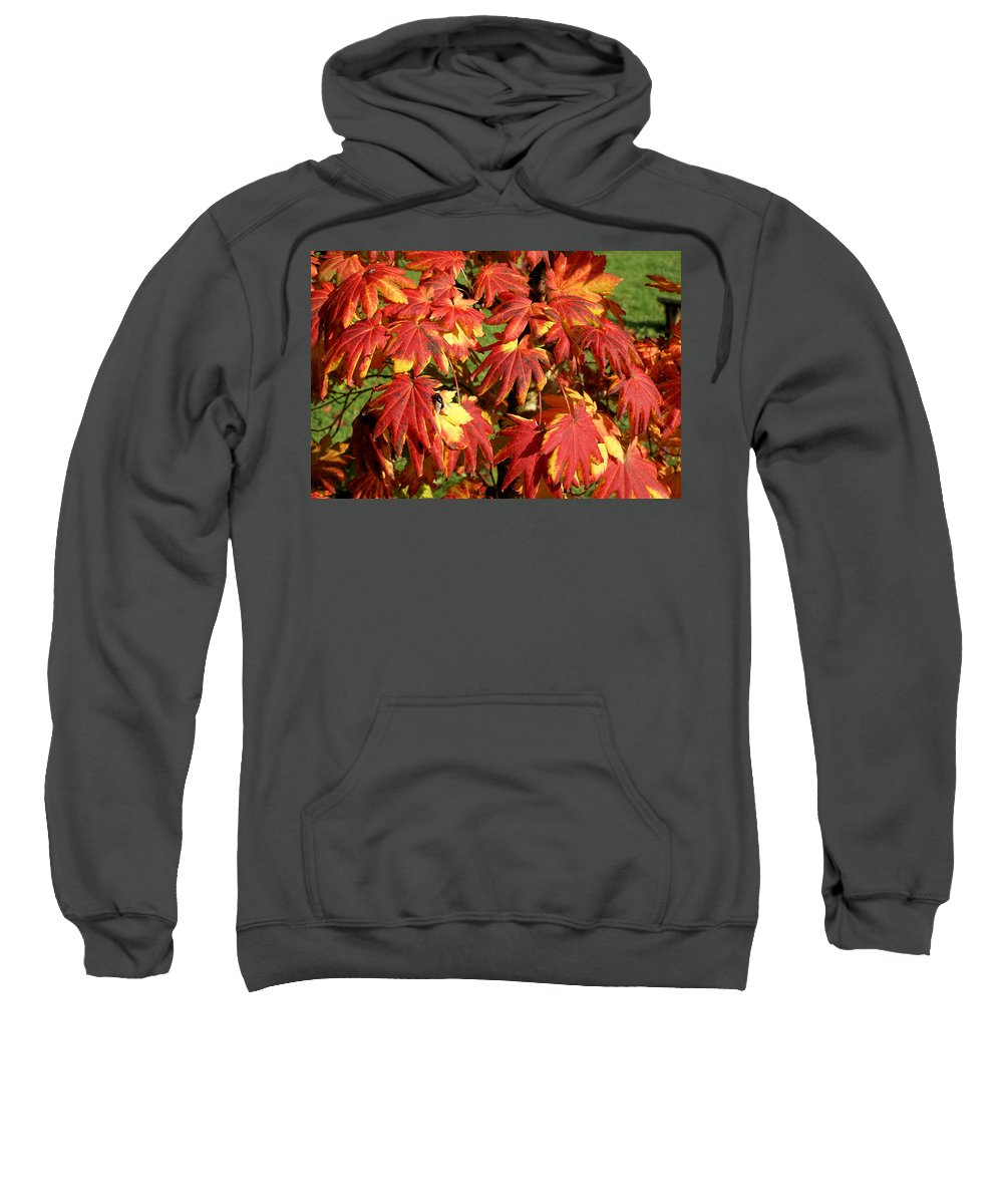 Autumn Sweatshirt featuring the photograph Autumn Leaves 07 by Ron Harpham