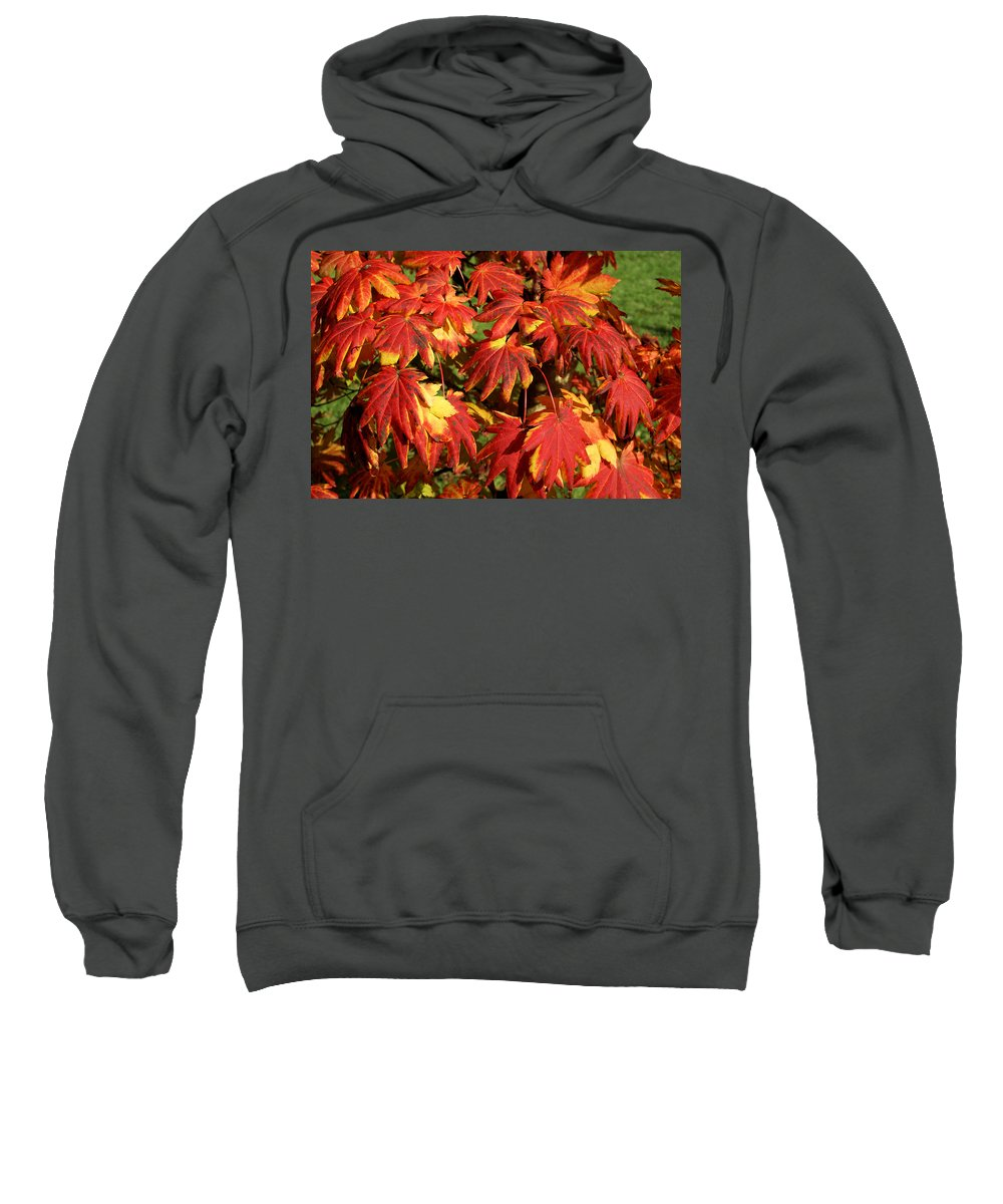 Autumn Sweatshirt featuring the photograph Autumn Leaves 08 by Ron Harpham