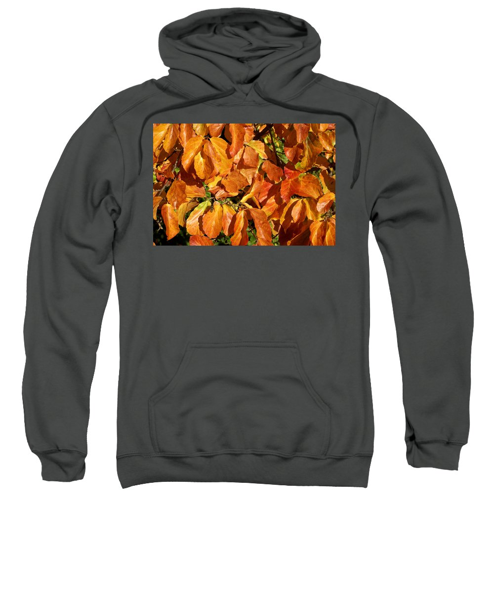 Autumn Sweatshirt featuring the photograph Autumn Leaves 82 by Ron Harpham