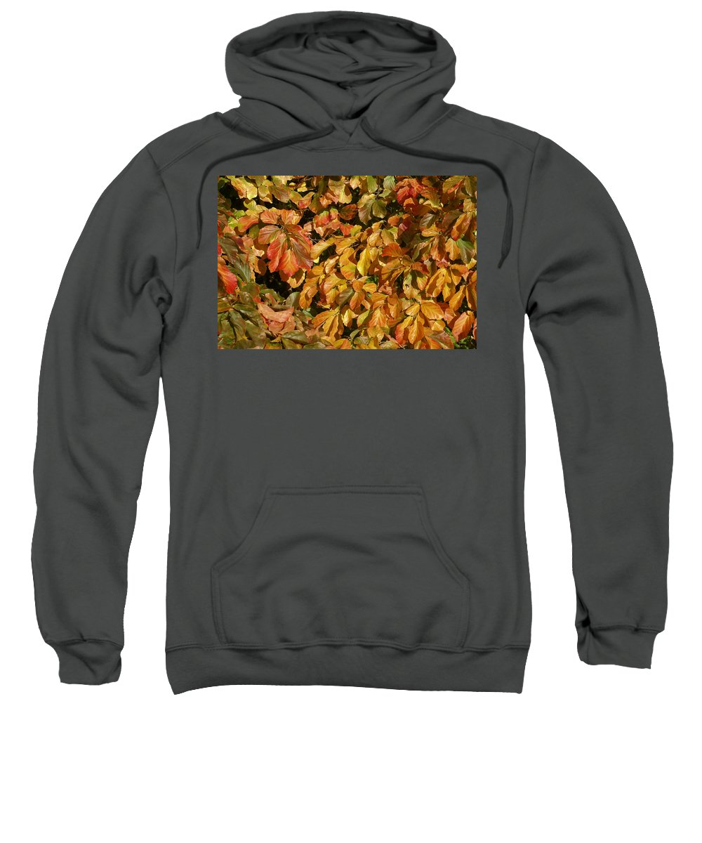 Autumn Sweatshirt featuring the photograph Autumn Leaves 83 by Ron Harpham