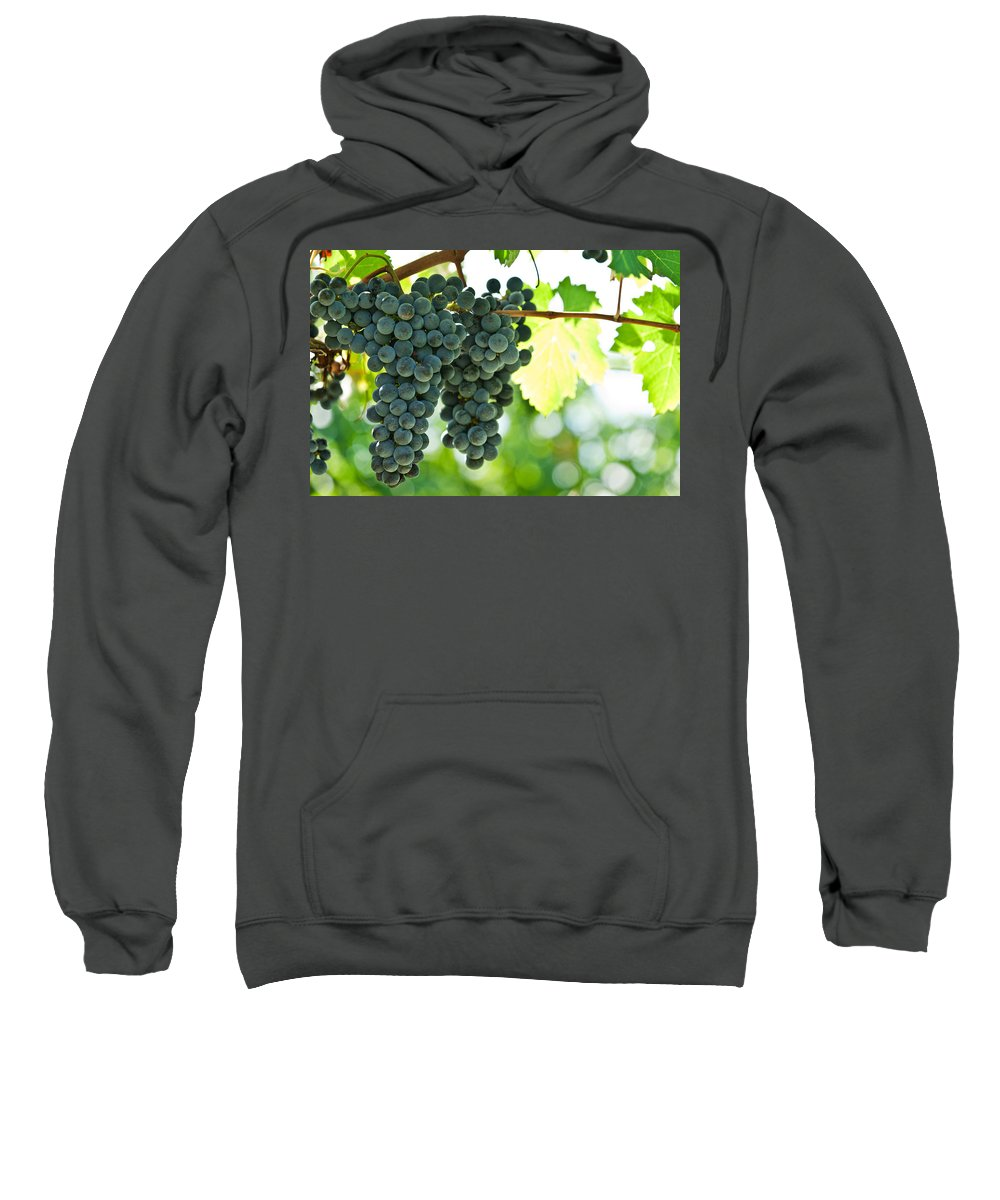 Agriculture Sweatshirt featuring the photograph Autumn Ripe Red Wine Grapes Right Before Harvest by U Schade