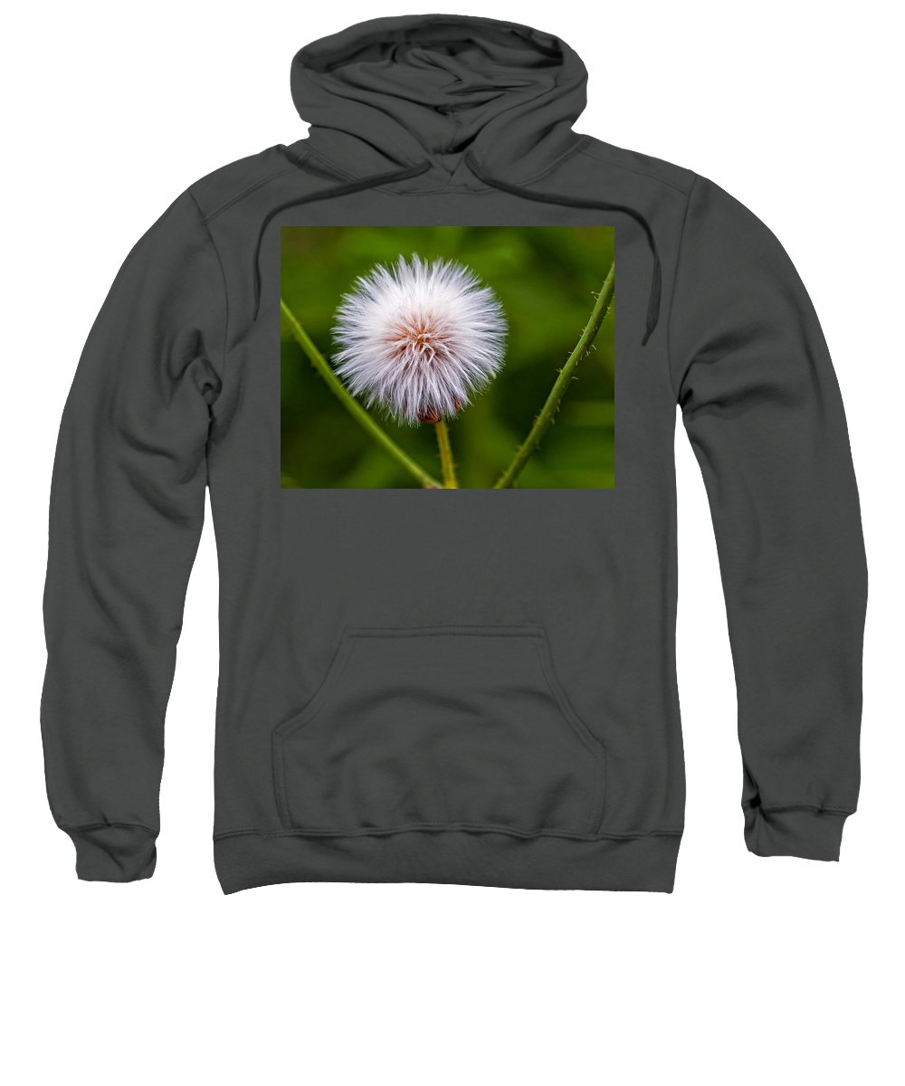 Weed Sweatshirt featuring the photograph Awaiting The Wind by Steve Harrington