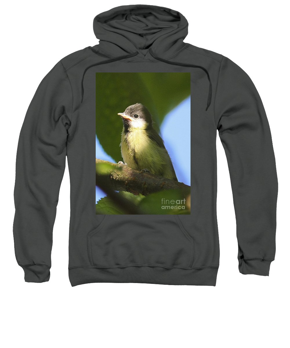 Bird Sweatshirt featuring the photograph Baby Coal Tit by Terri Waters
