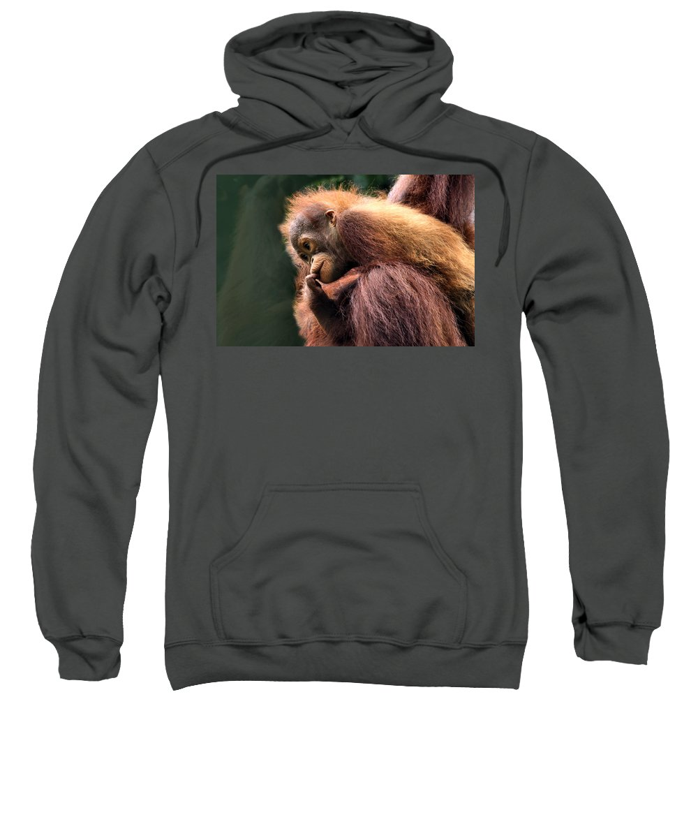 Orangutan Sweatshirt featuring the photograph Baby Orangutan Borneo by Carole-Anne Fooks