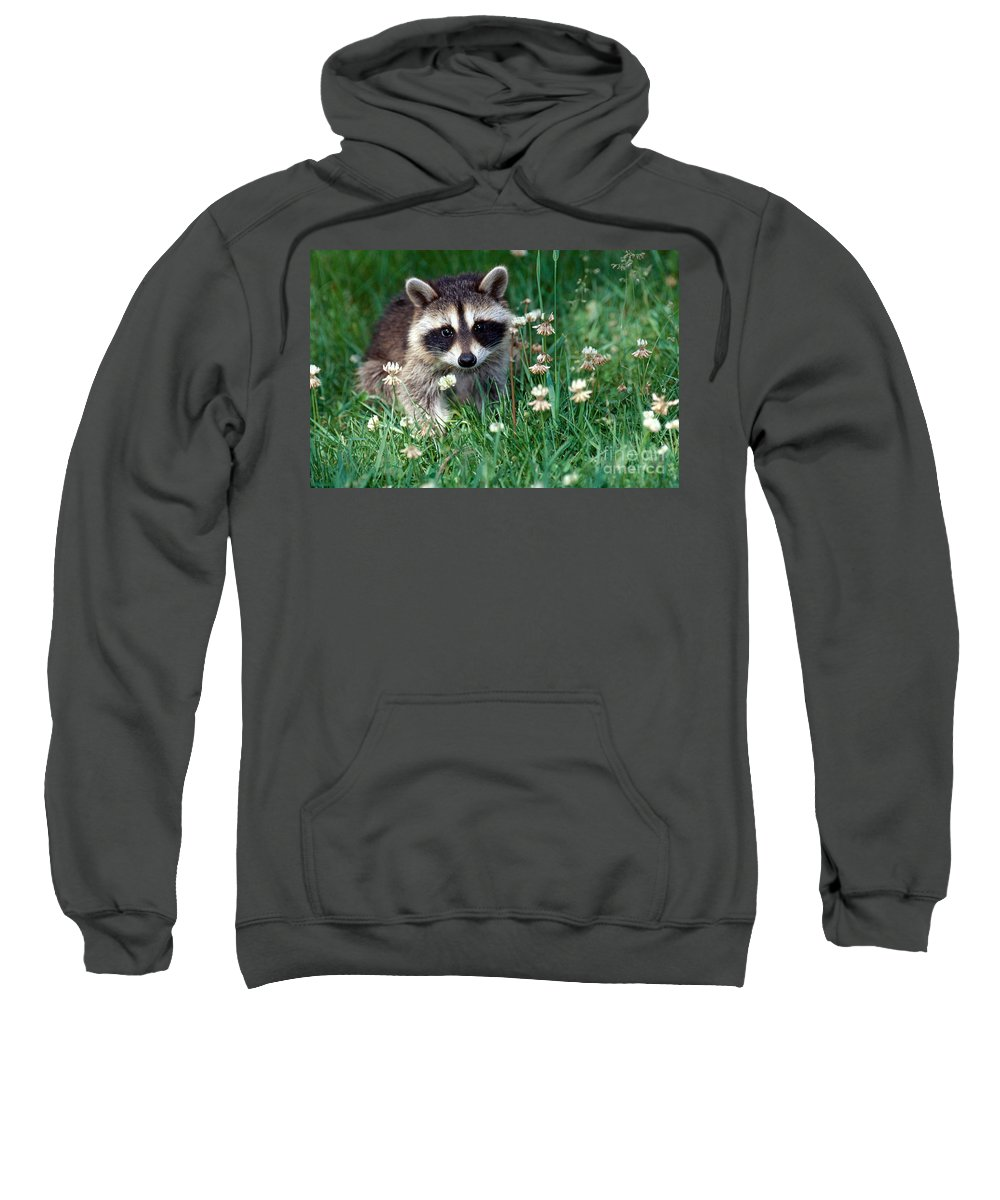 Raccoon Sweatshirt featuring the photograph Baby Raccoon by Jeanne White