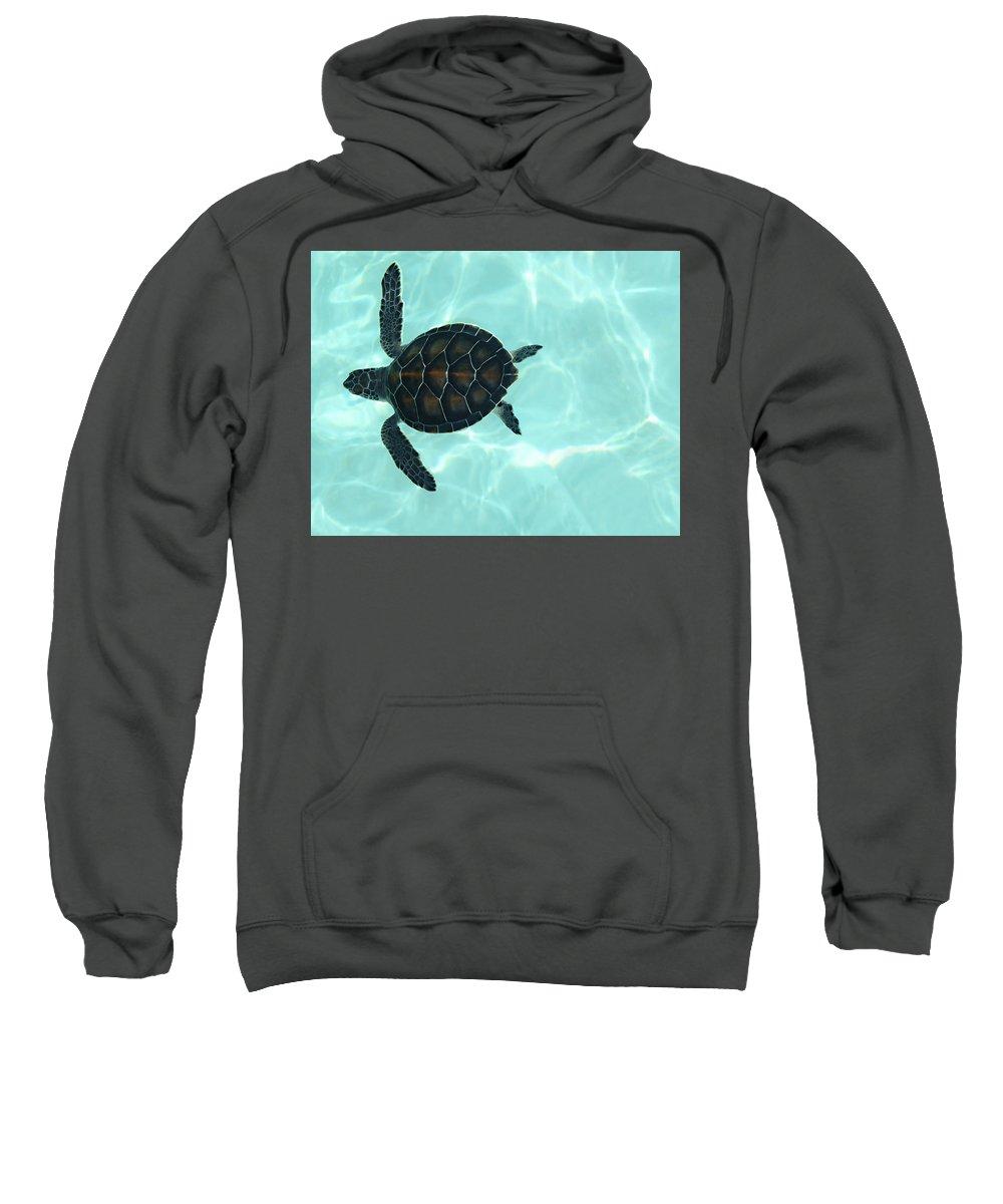 Baby Sea Turtle Sweatshirt featuring the photograph Baby Sea Turtle by Ellen Henneke