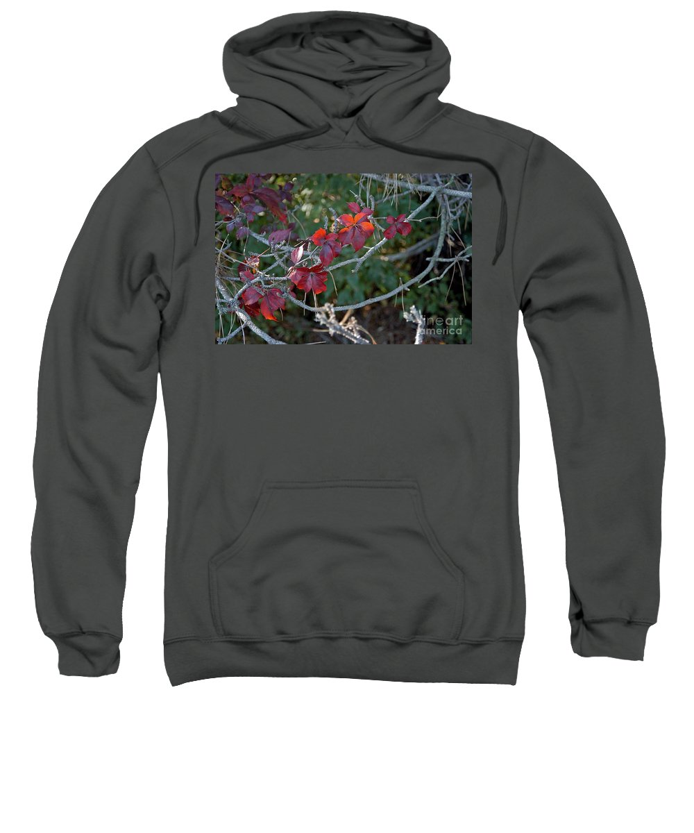 Gal Sweatshirt featuring the photograph Backlit by Joseph Yarbrough