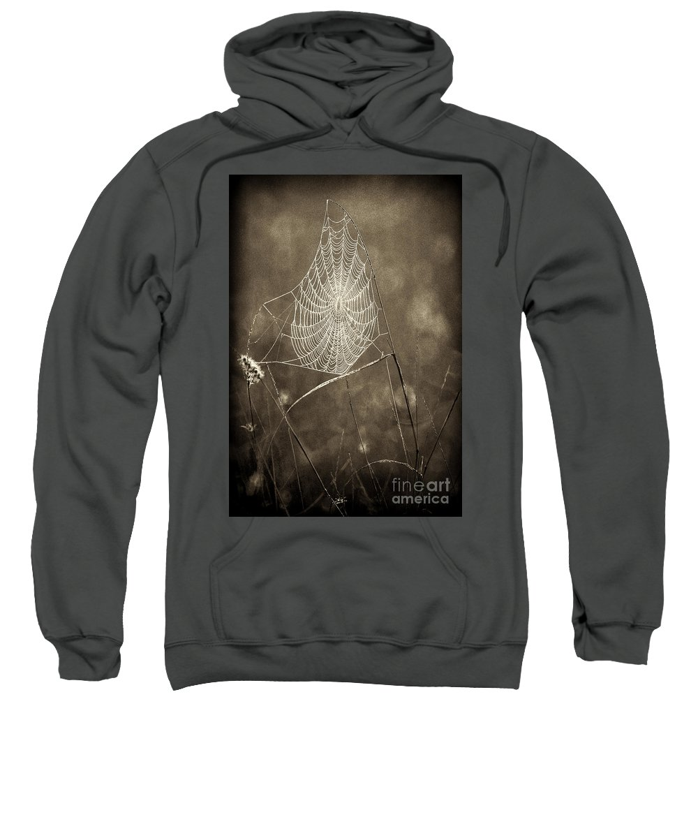 Wildlife Sweatshirt featuring the photograph Backlit Spider Web In Sepia Tones by Dave Welling
