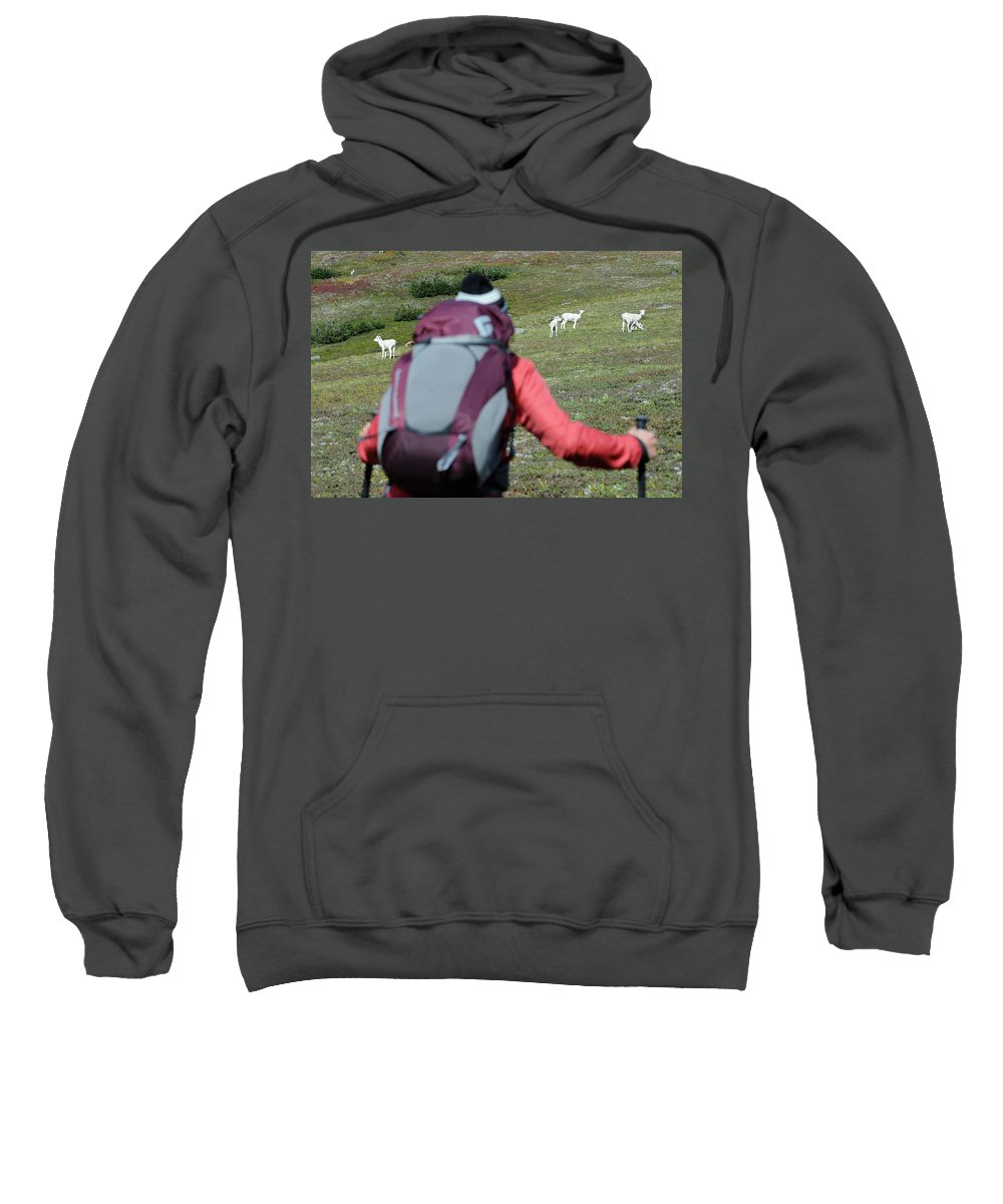 Adventure Sweatshirt featuring the photograph Backpacker Watches Dall Sheep by HagePhoto