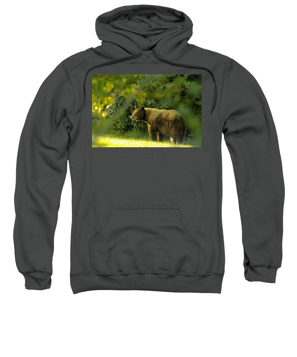 Bear Sweatshirt featuring the photograph Backyard Bruin by John Greaves
