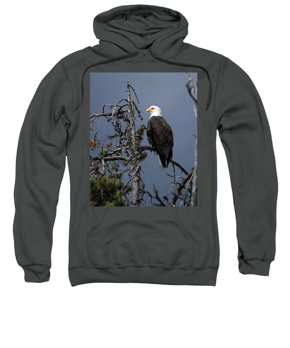 Bald Sweatshirt featuring the photograph Bald Eagle On Watch by Gary Langley