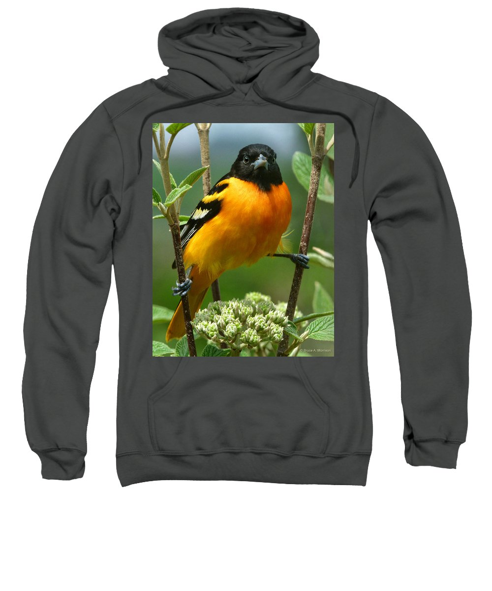 Oriole Sweatshirt featuring the photograph Baltimore Oriole by Bruce Morrison