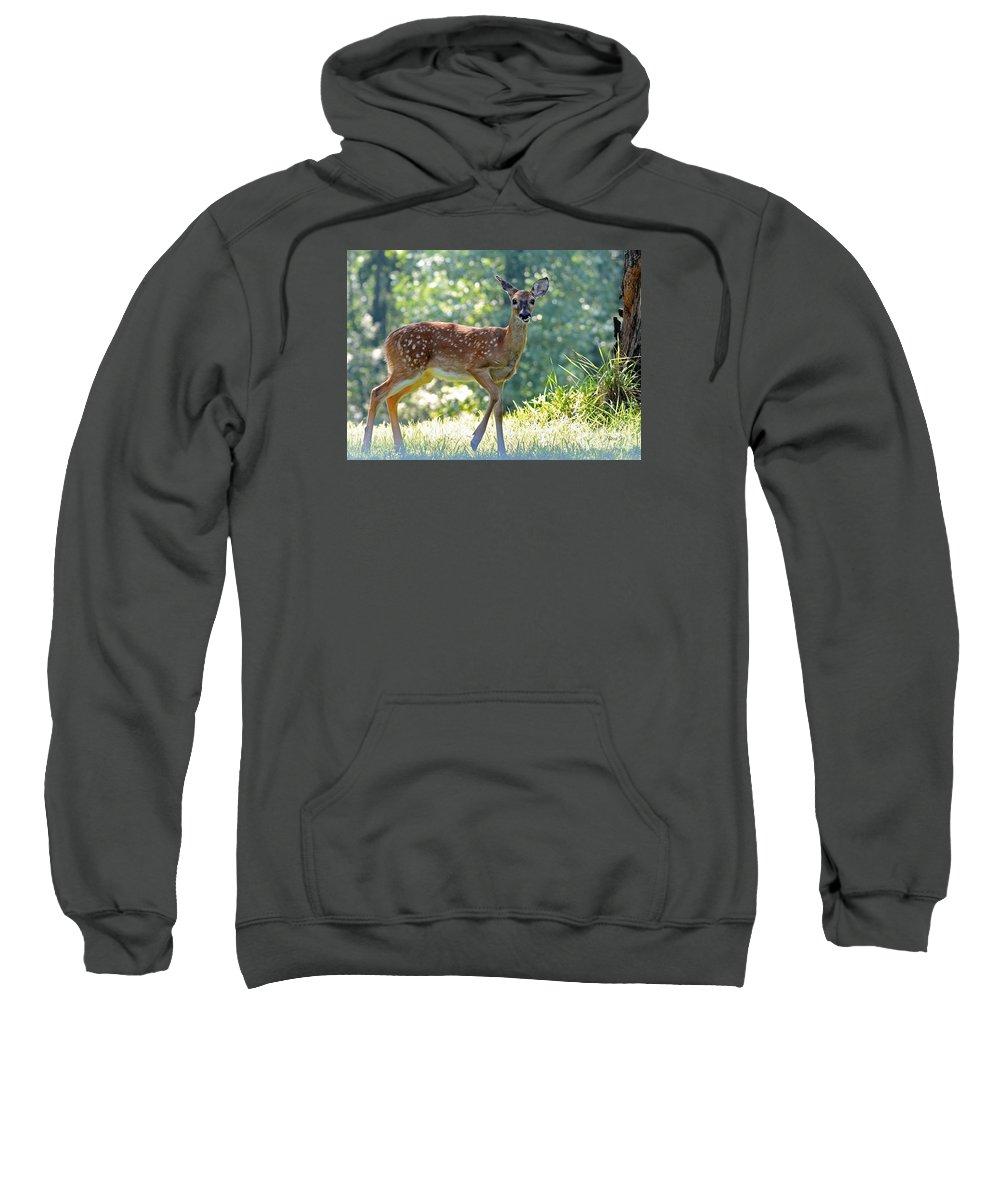 Nature Sweatshirt featuring the photograph Bambi 2 by Nava Thompson