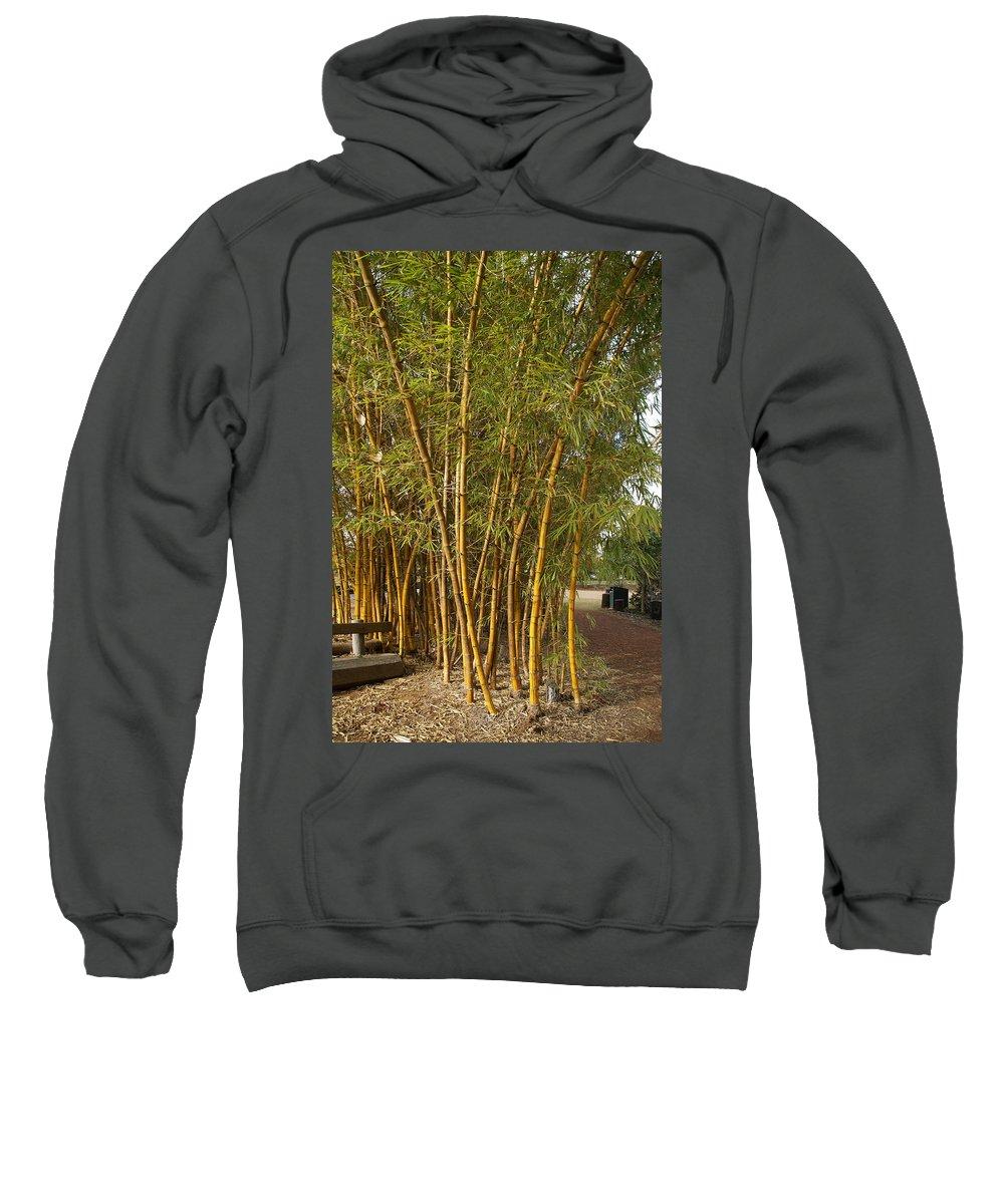Australia Queensland Qld Sweatshirt featuring the digital art Bambooo by Carol Ailles