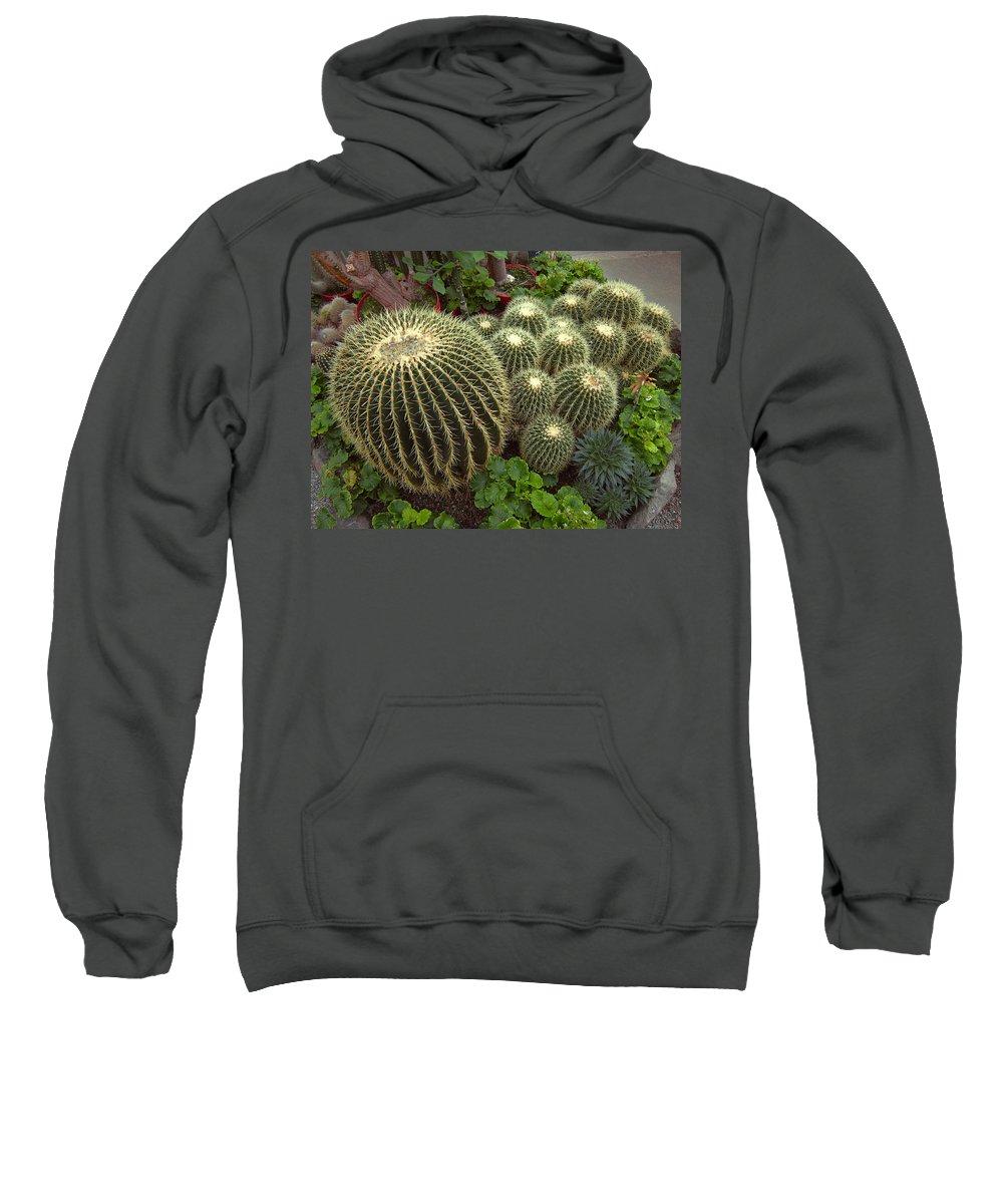 Cacti Sweatshirt featuring the photograph Barrel Cacti by Daniel Hagerman