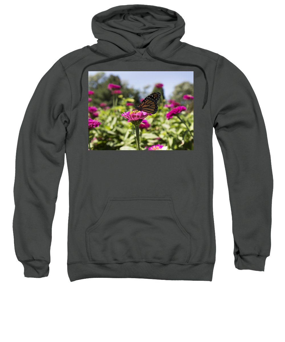 Butterfly Sweatshirt featuring the photograph Beautiful Butterfly by Bailey Barry