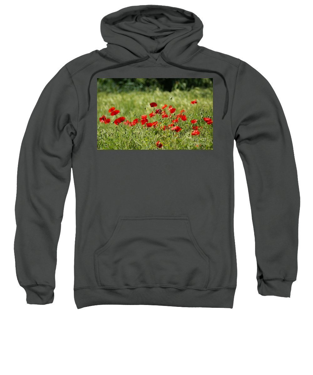 Poppies Sweatshirt featuring the photograph Beautiful Poppies 1 by Carol Lynch