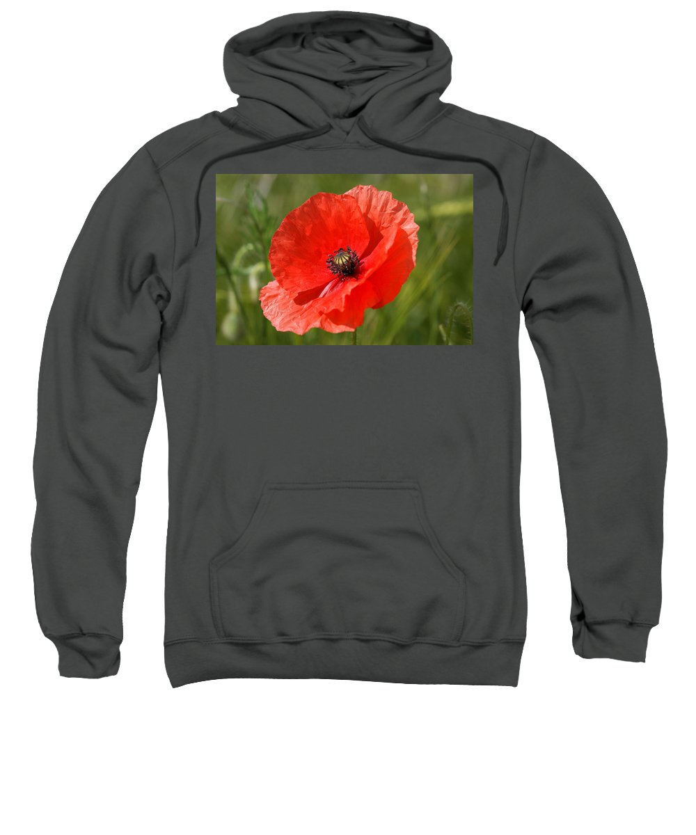 Poppies Sweatshirt featuring the photograph Beautiful Poppies 7 by Carol Lynch