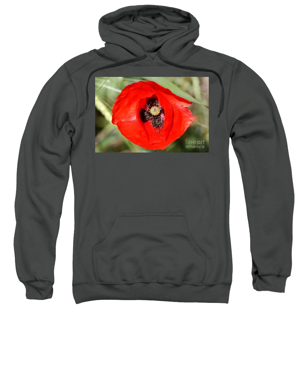 Poppies Sweatshirt featuring the photograph Beautiful Poppies 9 by Carol Lynch