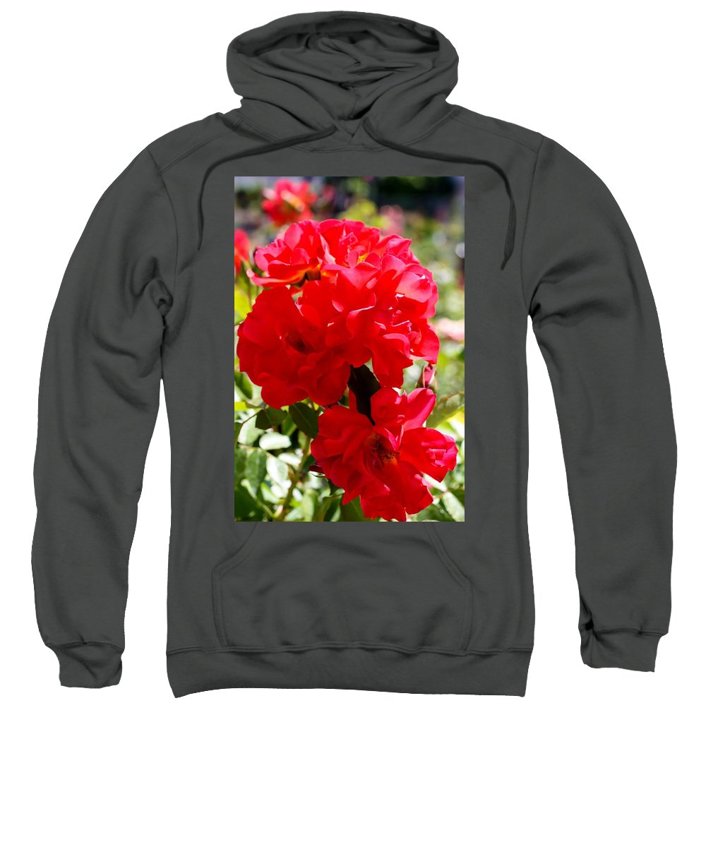 Beautiful Red Roses Sweatshirt featuring the photograph Beautiful Red Roses by Cynthia Woods