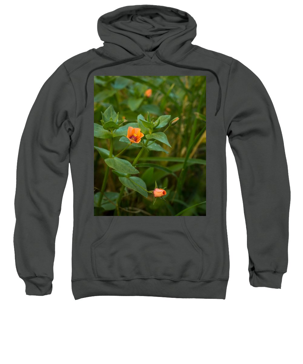 Flower Sweatshirt featuring the photograph Beauty Under Our Feet by Ernie Echols