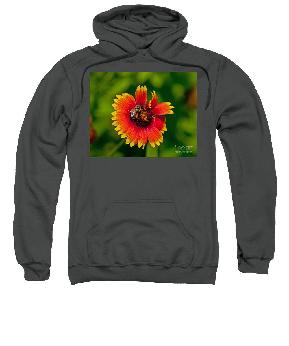 Flower Sweatshirt featuring the photograph Bee On Orange Flower by Stephen Whalen