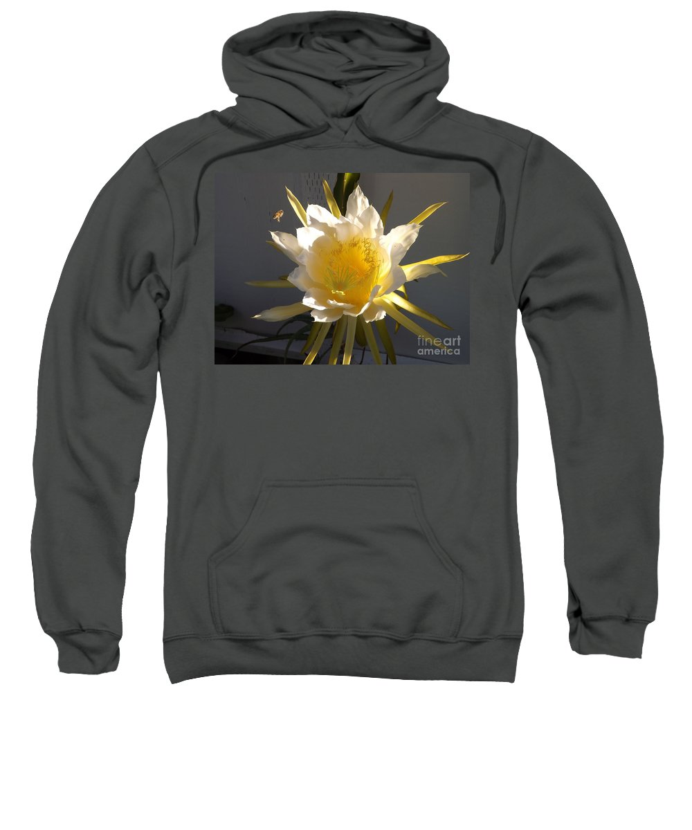 Dragon Fruit Sweatshirt featuring the photograph Bee Pollinating Dragon Fruit Blossom by Jussta Jussta