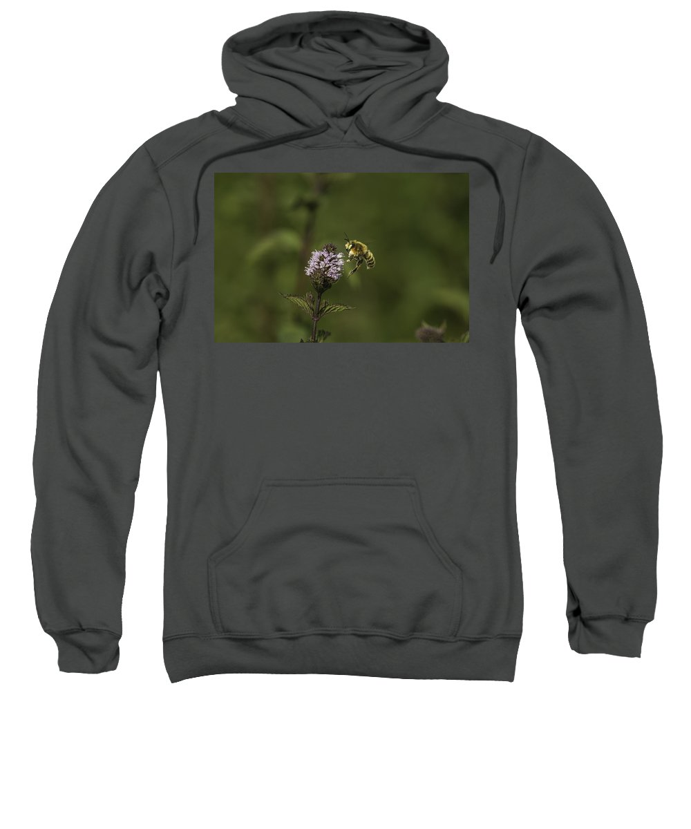 Bee Sweatshirt featuring the photograph Bee Pollination by Thomas Young