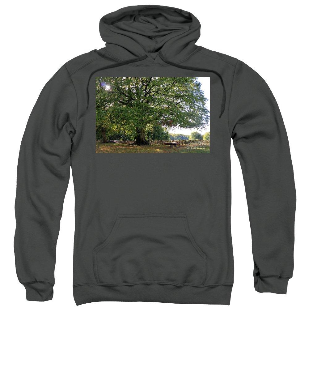 Beech Tree Britain Sweatshirt featuring the photograph Beech Tree Britain by Julia Gavin