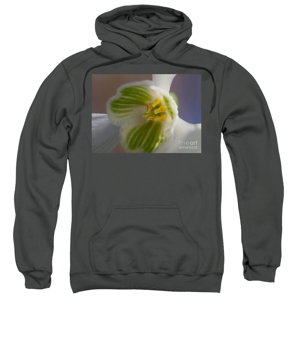 Snow Piercer Sweatshirt featuring the photograph Bee's View Of A Snowdrop by Kathryn Bell