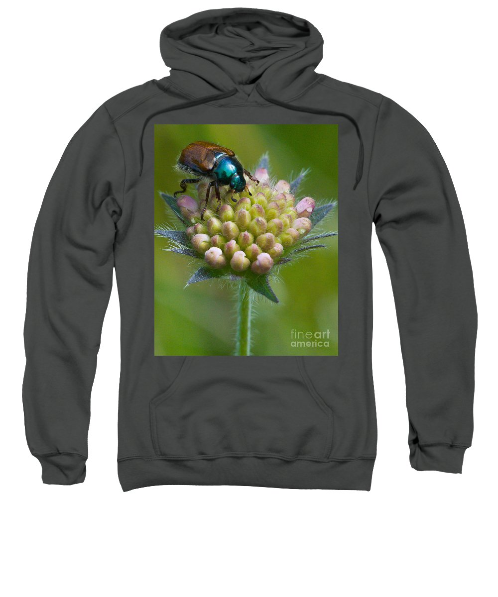 Animal Sweatshirt featuring the photograph Beetle Sitting On Flower by John Wadleigh