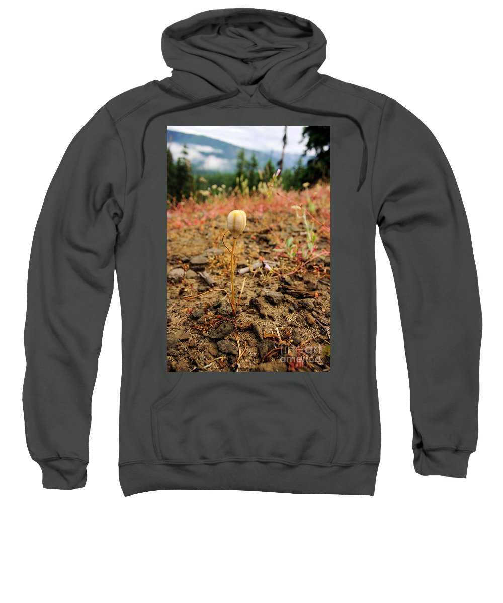 Plants Sweatshirt featuring the photograph Before The Blossom by Jeff Swan